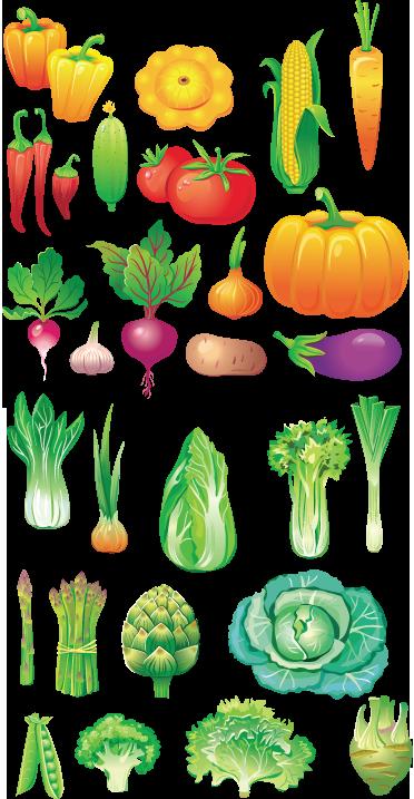 TenStickers. Coleção de autocolantes de legumes. Autocolantes decorativos para cozinha - coleção de vegetais coloridos vibrantes. Ideal para residências ou empresas.