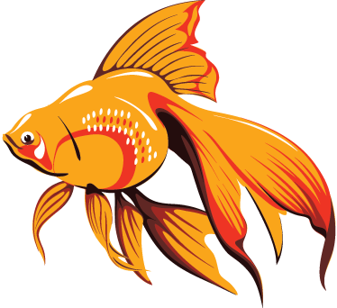 TenStickers. Orange Aquarium Fish Wall Sticker. Wall Stickers - Add colour to dull walls and spaces with this orange pet fish. Ideal for decorating homes or businesses.