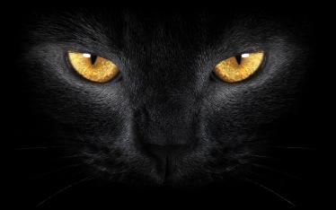 TenStickers. Sticker gato preto misterioso para laptop. Sticker decorativo ilustrando um gato preto. ideal para dar ao seu computador portátil um toque misterioso e intrigante.