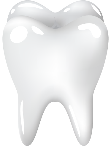 TenStickers. Molar Tooth Sticker. A dentist wall sticker of a molar tooth. Decorate your dentist or pharmacy with this sticker. This teeth wall decal shows an illustration of a single white tooth available in various different sizes.