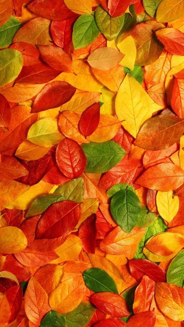TenVinilo. Vinilo decorativo hojas suelo otoño. Adhesivo con una atractiva textura vegetal. Indícanos el ancho y el alto de tu frigorífico para adaptar el diseño a tus necesidades.