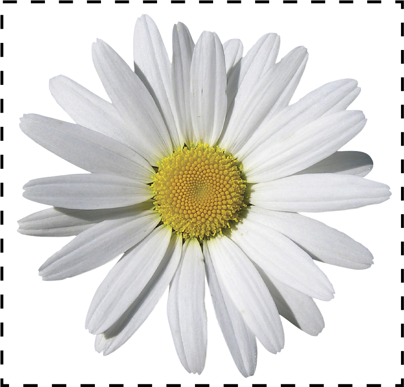 TenStickers. Daisy Light Switch Decal. Decorate small areas such as light switches with this daisy decal from our collection of daisy wall stickers.