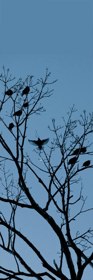 TenStickers. Autocolante decorativo imagem passáros. Autocolante decorativo com uma imagem de ramos e pássaros. Ideal para a decoração da cozinha e do frígorifico.