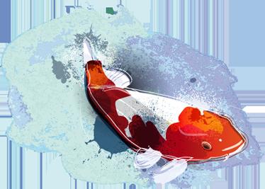 TenStickers. 벽 스티커 잉어 물고기 그림. 이 사랑스러운 벽 스티커는 화려하고 우아한 방식으로 집을 장식합니다. 이 스티커는 붉은 색과 흰색으로 칠해진 잉어 물고기 또는 니시 키 고 이로 구성됩니다.