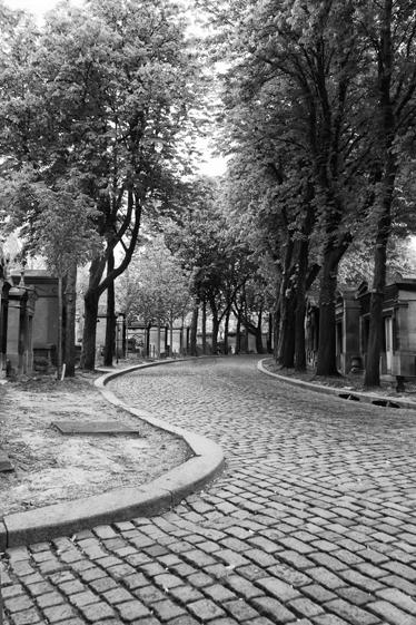 TenStickers. 黑色和白色的路墙壁画. 照片壁画-拍摄的鹅卵石铺成的街道,树木和小人行道。