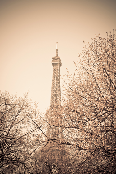 TenStickers. Eiffel Towel Trees Wall Mural. Photo Murals - Sepia tone photo of the Eiffel Tower in Paris surrounded by autumn trees. Available in various sizes.