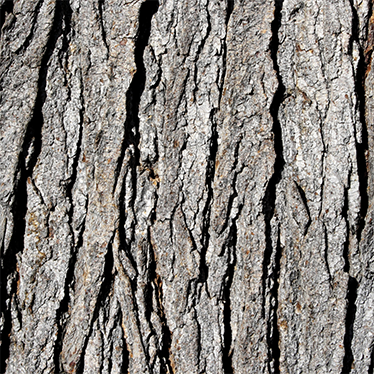 TenStickers. Tree Bark Texture LACK  Decal. Decals - Decorate plain and dull furniture with this tree bark texture decal. Ideal for customising IKEA furniture.