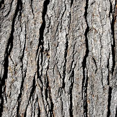 TenVinilo. Vinilo decorativo árbol LACK. IKEA Vinilos decorativos. Personaliza la clásica mesa auxiliar LACK con esta textura de corteza de árbol. Este adhesivo con imagen fotomural proporcionará un aire fresco y diferente a tu hogar que te ayudará a marcar la diferencia a la vez que proteges la mesa de posibles ralladas y golpes.