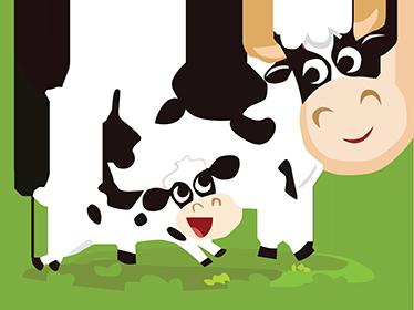 TenStickers. Otroci jolly krave stene nalepke. Otroške stenske nalepke - ilustracija nekaj srečnih krav iz naše kolekcije tematskih sten na kmetiji. Zabavna, barvita in igrivost za dekoriranje otroške sobe. Ta dekoracija kravjega stojala je prav tisto, kar potrebujete, da napolnite prazen prostor doma in prinesite barvo na stene!