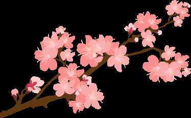 TenStickers. Vinil Decorativo Cerejeira em Flor. Vinil decorativo de flores com uma cerejeira em flor, vinil decorativo colorido para decorar paredes de casa, dará um ar mais acolhedor e colorido.