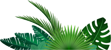 TenStickers. Tropical Leaves Wall Sticker. A fantastic decal illustrating leaves that are normally found in the jungle. Brilliant design from our collection of jungle wall art stickers.