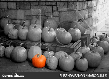 TenStickers. Pumpkins Wall Mural. Photo Murals - Artistic black and white photographic shot with a contract of one bright orange pumpkin.