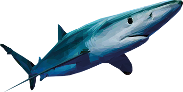 TenStickers. Geometrische Haai Muursticker. Sticker van de Catalaanse illustrator LAMAI met een gedetailleerde tekening van een haai. Verkrijgbaar in verschillende maten. Ook voor ramen en auto's.