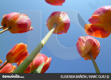 TenStickers. Tulip Sky Wall Mural. Photo Murals - Shot of tulips into the sky. Elegant feature for the home. Available in various sizes.