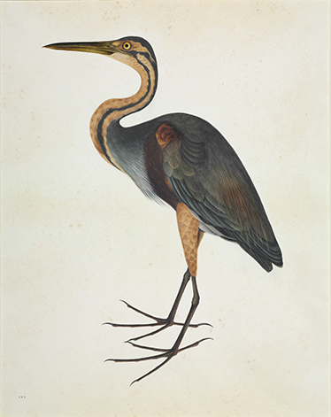 TenStickers. Heron Bird Sticker. Mural for people who love the world of ornithology and reproductions of antique artwork.