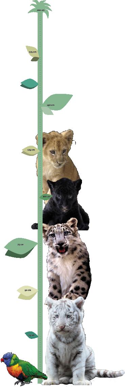 TenStickers. Diagrama de înălțime a pisicii mari. Dacă copilul tău este un iubitor imens al pisicilor mari, atunci acest autocolant decorativ de perete este vinilul absolut perfect pentru tine!