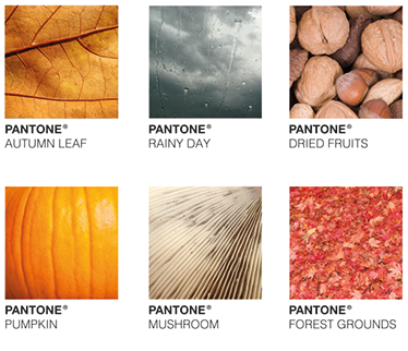 TenStickers. Autumn Pantone. The Wall sticker consists of six different autumn pictures (autumn leaf, rainy day, dried fruit, pumpkin, mushroom and forest floor).