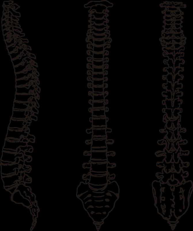 TenVinilo. Vinilo decorativo columna vertebral línea. Vinilos para decoración de consultas médicas con el dibujo de la parte frontal, lateral y dorsal de nuestra columna vertebral.