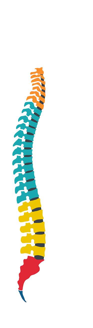TenStickers. Vertebral Column Wall Sticker. A wall sticker highlighting the vertebral column of the human body! Perfect for all those science heads out there! Choose your size.