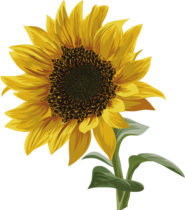 TenStickers. Beautiful sunflower t-shirt. Show your love for flowers with this sunflower t-shirt, with its beautiful bright colors. With this flower t-shirt you would amaze everyone you meet.