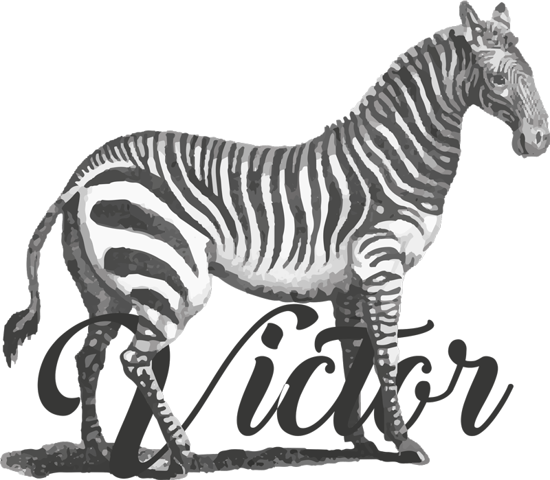 TenStickers. Personalised Zebra T-Shirt. Personalised zebra t-shirt which features a vintage image of a zebra with your name underneath. Available in various sizes.