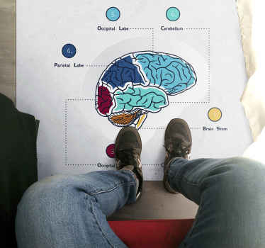 An incredible medical brain vinyl rug to help educate you and your guests! Save 10% off your first order when you sign up.