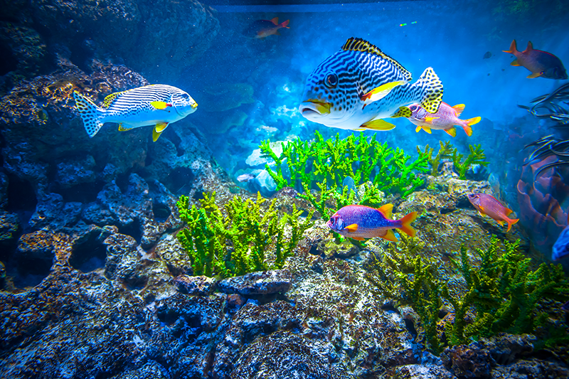TenVinilo. Aflombra vinilo peces submarinos. Alfombra de vinilo para salón  de paisaje submarino natural con el diseño de un mar azul profundo y peces ¡Envío a domicilio!