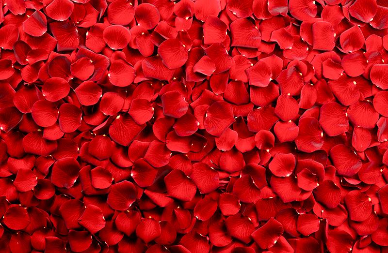 TenStickers. Dywan z czerwonych róż. Dywan winylowy w czerwone róże. Jest prezentowany z projektami oryginalnego obrazu, idealny do dekoracji Twojego domu.