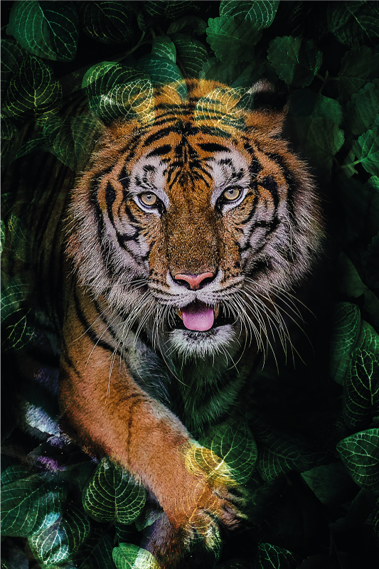 TenVinilo. Alfombra vinilo animales tigre en la selva. Esta alfombra vinilo animales de tigre salvaje le daría un aspecto de lujo a su hogar. Elige las medidas que desees ¡Compra online!