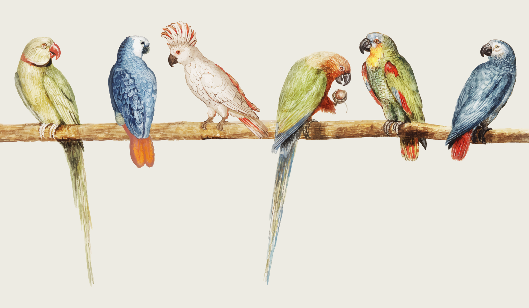 TenStickers. Modern gray with birds and branches flower rug. Vinyl rug with parrots. It presents different colorful parrots sitting on a branch. It is made of high quality vinyl and you can choose any size.