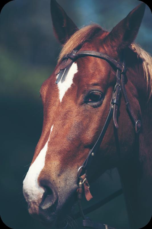 TenStickers. Tapete de animal com cabeça de cavalo. Este produtode tapete de vinil animal seria perfeito para você! Tenha-o em sua casa em um curto espaço de tempo hoje! Entrega ao domicílio!