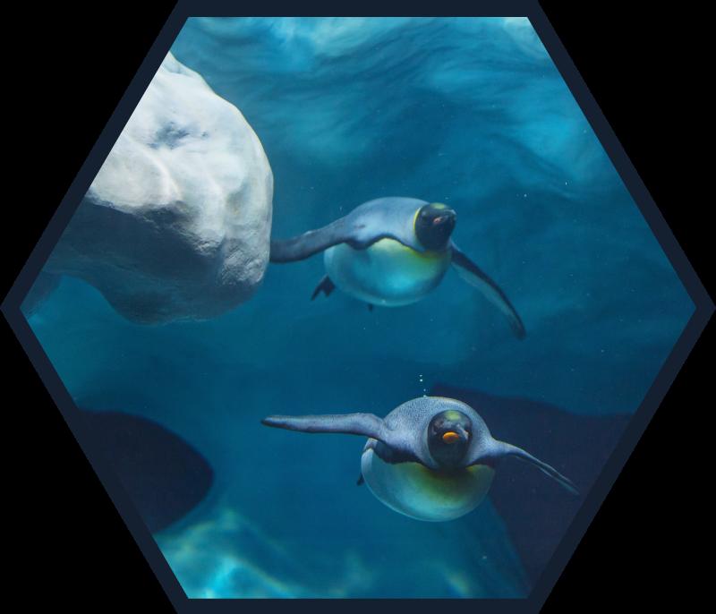 Tenstickers. Svømming pingviner dyrematte. Vi kan gi deg et vindu for å se sjødyrene med vårt fantastiske teppe for svømmingpingviner. Kjøp nå online! Enkel å påføre! Hjemmelevering!