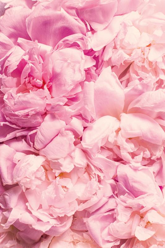 TenStickers. şakayık gerçekçi pembe çiçekler çiçek halı. Bu çiçek, yatak odanızdaki, oturma odanızdaki veya ev ofisinizdeki herhangi bir alanı dekore etmenin mükemmel bir yoludur! Sadece birkaç gün içinde eve teslim!
