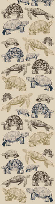TenStickers. Turtles beige background Bedroom Wallpaper. Turtle prints wallpaper decoration for home wall space. It is customisable to meet any of your need and it application is easy.