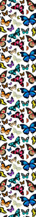 TenStickers. carta da parati sala da pranzo Bellissime e colorate farfalle. Bellissime e colorate farfalle da parati. Questo disegno è stampato con grafica di alta qualità che lo fa sembrare realistico.